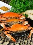 Caranguejos cozinhados com especiarias Festival do caranguejo e da cerveja Caranguejos azuis de Maryland imagens de stock royalty free