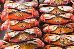 Caranguejos de Dungeness inteiros Imagem de Stock