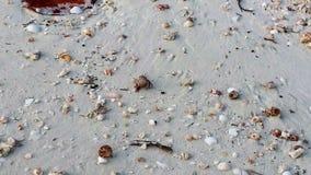 Caranguejos de eremita Foto de Stock Royalty Free