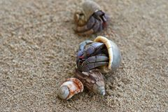 Caranguejos de eremita na areia Fotografia de Stock Royalty Free
