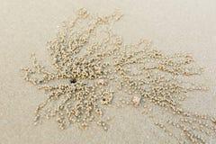 Caranguejos de Ghost que escavam bolas da areia Imagens de Stock Royalty Free
