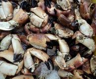 Caranguejos do mercado Fotos de Stock