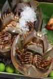Caranguejos em ferradura Imagens de Stock Royalty Free
