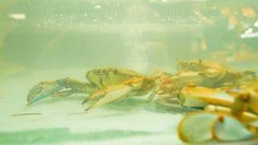 Caranguejos em um tanque de vidro no mercado da especiaria de Genoa vídeos de arquivo