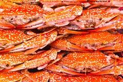 Caranguejos grelhados coloridos e molho tailandês do estilo Fotografia de Stock