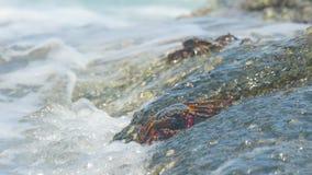 Caranguejos na rocha na praia filme