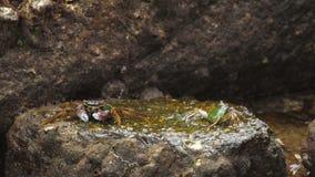 Caranguejos na rocha na praia vídeos de arquivo