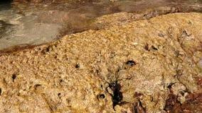 Caranguejos nas rochas de uma praia em Salento video estoque