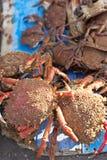 Caranguejos no mercado de peixes fotos de stock royalty free