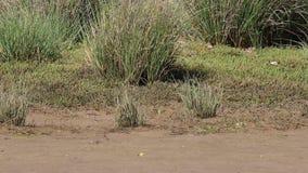 Caranguejos no parque natural de Estrecho do espanhol vídeos de arquivo