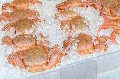 Caranguejos peludos japoneses Fotos de Stock