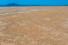Caranguejos pequenos das esferas da areia dos milhares da praia Imagens de Stock