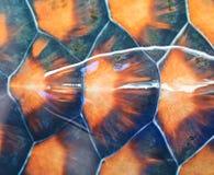 Carapace черепахи стоковое фото