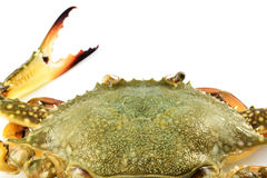 Carapace crab. Isolated with White background Stock Images