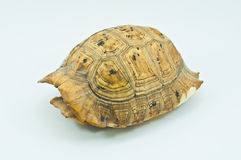Carapace Royalty Free Stock Photos