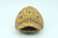 Carapace Stock Photography