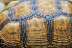 A carapace of sea turtle as background Stock Images