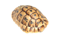 Carapace of Tortoise turtle Royalty Free Stock Photography