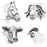 Caras animales Stock de ilustración