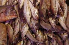 Caras assustadores do mercado de peixes Fotos de Stock Royalty Free