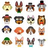 Caras de los perros del inconformista fijadas Fotos de archivo libres de regalías