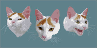 Caras de un gato ilustración del vector