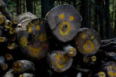 Caras inesperadas del bosque Imagen de archivo libre de regalías