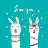 Caras lindas del lama Alpaca de la historieta ilustración del vector