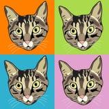 Caras rayadas del gato de Tabby Fotografía de archivo libre de regalías