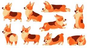Carattere del cane del fumetto Pose dei cani del corgi di sonno, esercizio di razza di sport di forma fisica del cane e posa di r illustrazione vettoriale