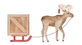 Carattere positivo sveglio delle alci che porta slitta rossa luminosa con la scatola di legno enorme illustrazione vettoriale