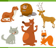 Caratteri divertenti dell'animale selvatico messi Fotografia Stock