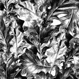 Caratterizza una struttura senza cuciture della foglia della quercia Immagini Stock