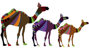 Caravan. Group of camels on a white background in ethnic style Royalty Free Stock Photo