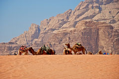 Caravan. It is possible to rent a pickup tracks and explore Wadi rum desert with local drivers or to get camel from beduin and ride camel to see desert...One of Stock Photography