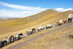 Caravan Royalty Free Stock Images