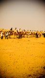 Caravan. Desert caravan in Sahara, dramatic light Royalty Free Stock Photo