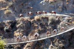 Caravan on bridge. A mule caravan crossing suspension bridge over Thuli Bheri Nadi river, Tripurakot, Dolpa District, Nepal Royalty Free Stock Photos
