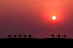 Caravan camel Royalty Free Stock Image