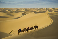 Caravan camel on Badan jaran desert at Inner Mongolia Stock Photos