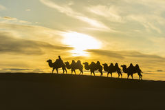 Caravan camel on Badan jaran desert at Inner Mongolia Stock Images