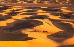 Caravan. Camel caravan going through the sand dunes in the Sahara Desert, Morocco Royalty Free Stock Image