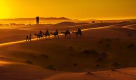 Caravan. Camel caravan going through the sand dunes in the Sahara Desert, Morocco Royalty Free Stock Photography