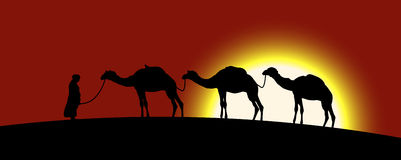 The caravan of camels Stock Images