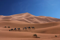 Caravan of camels royalty free stock photography