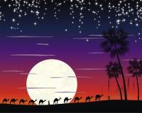 Caravan of camels in the desert Stock Image