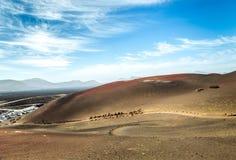 Caravan of camels in the desert on Lanzarote Stock Photos