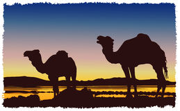 Caravan camels desert Stock Photos