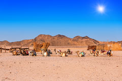 Caravan of camels Royalty Free Stock Images
