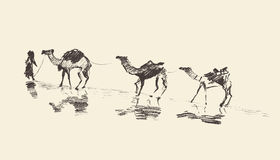 Caravan Camels Desert Vector Illustration Sketch Royalty Free Stock Image